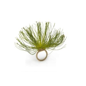 Cypress Bloom Napkin Ring